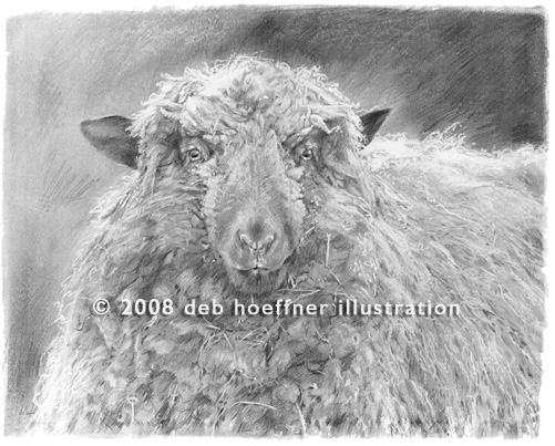 sheep illustration by talented