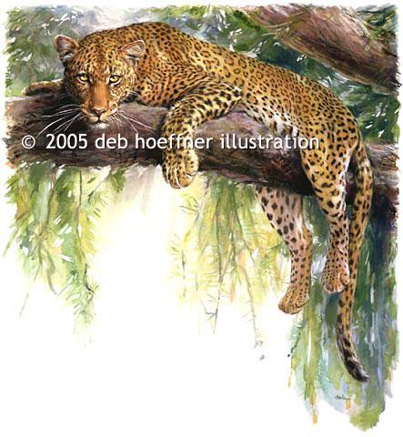 http://www.debhoeffner.com/animals/leopard.jpg