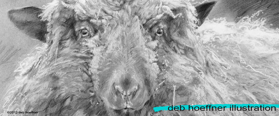 black and white pencil drawing of sheep
