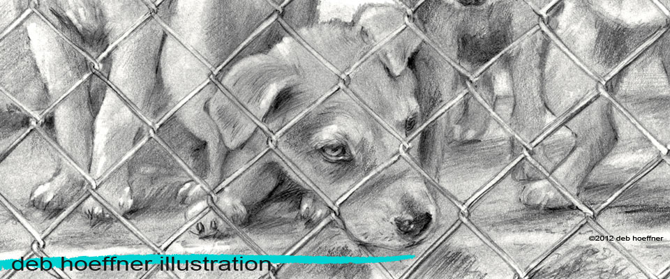 realistic illustration pencil drawings deb hoeffner illustration