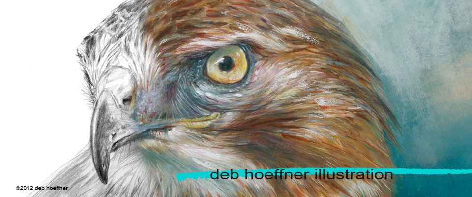Red tailed Hawk Portrait realistic illustration deb hoeffner illustration