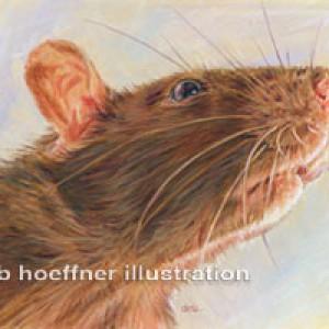 rat illustration editorial art