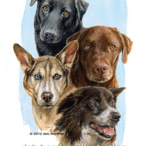 shelter dogs book illustrated by deb hoeffner