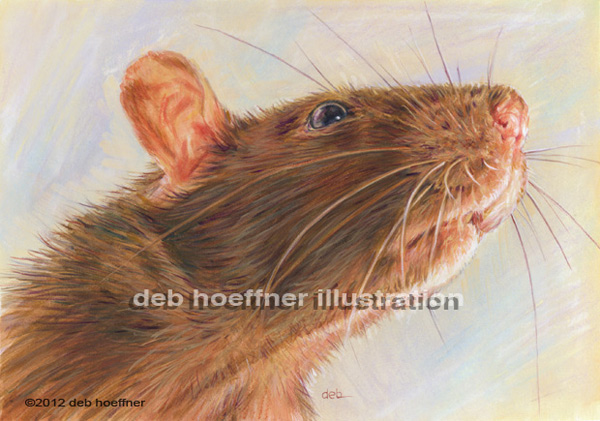 rat portrait illustration sense of smell editorial art New York Times