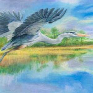 blue heron in flight watercolor painting