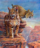 bobcat-grand-canyon wildlife art deb hoeffner