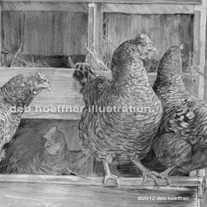 chickens realistic farm animal drawing
