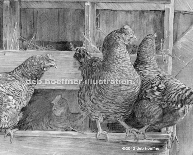 chickens drawing by deb hoeffner