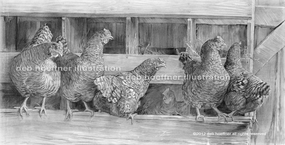 barred plymouth rock chickens at the Howell Living History Farm