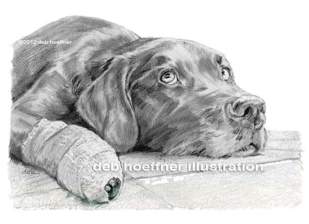 dog with bandaged paw drawingi