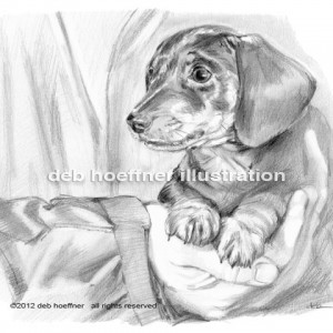 black and white illustration of dachshund puppy for book