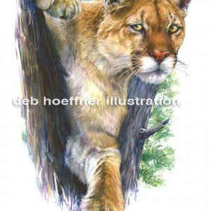 Mountain Lion art and illustration by deb hoeffner