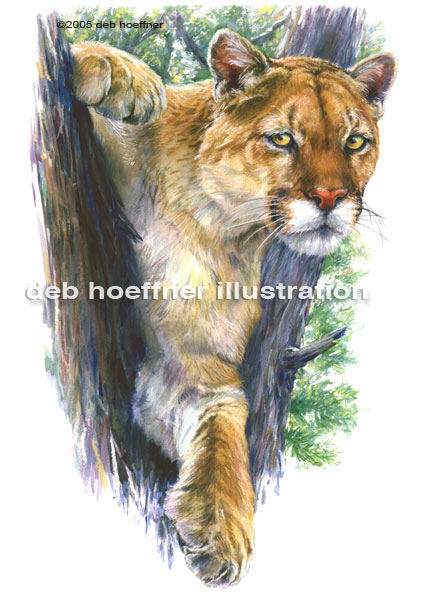 Mountain Lion art and magazine spot illustration by deb hoeffner