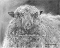 Howell Farm Dreadlocks - realistic animal drawing