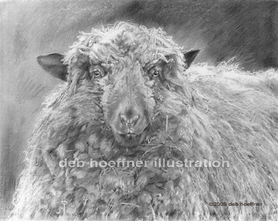 Farm animals sheep art illustration by talented illustrator and artist