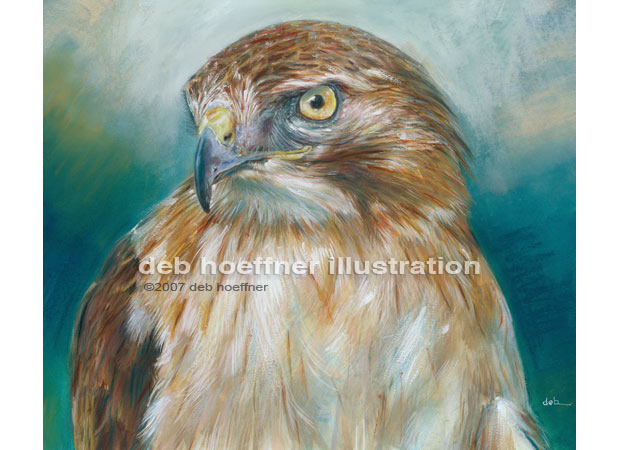 Bird painting red-tailed hawk of Audubon Society