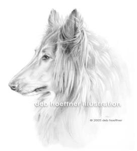 pencil portrait rough collie dog