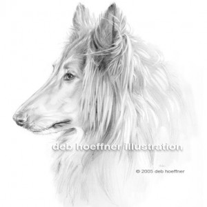 pencil pet portrait rough collie dog