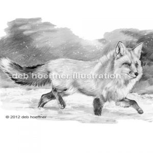 red fox running in snow illustration