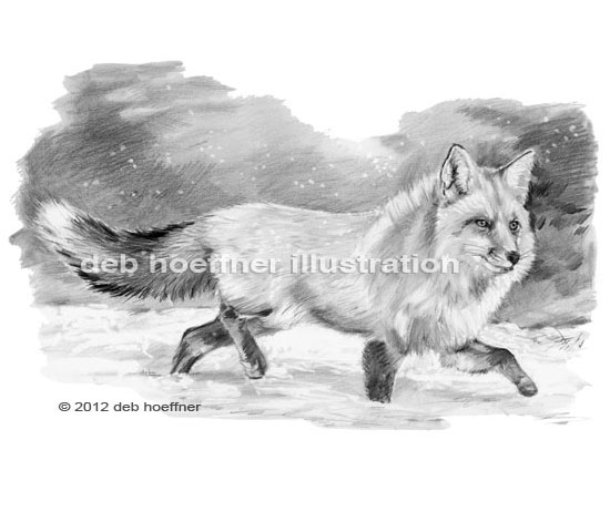 red fox running in snow illustration