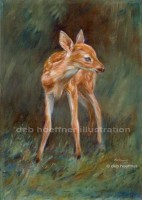 baby deer illustration deb hoeffner